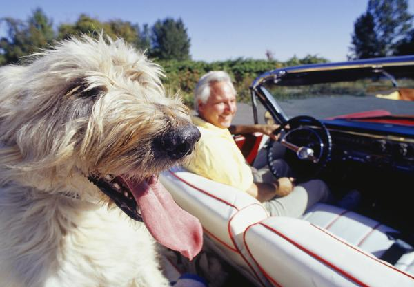 Seat Belt Repair - Dog Chewed-up Seat Belt